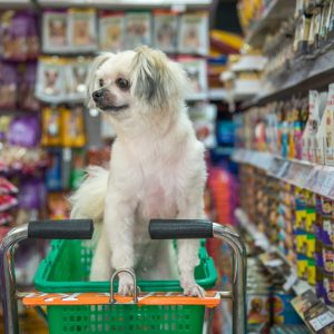 4 Remarkable Reason to Select an Online Pet Store