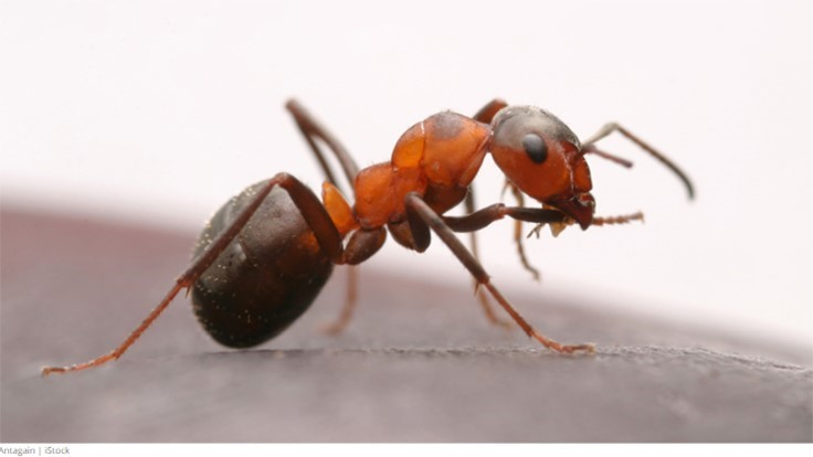 Tips to Help Keep Ant Infestations at Bay 1