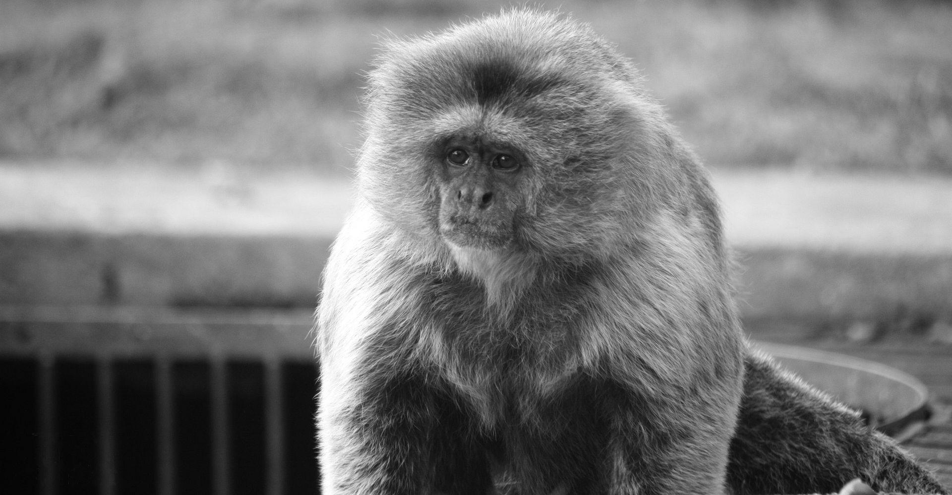 Monkey Naming: 301 Unique ,Funny & Cool Monkey names 1