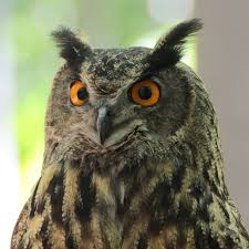 Cute, Unique and Cool Male Owls names 1