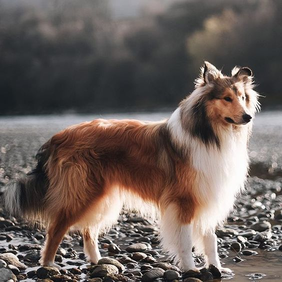 Top 51 Best Dog Breeds and What Make Them the Best! 126