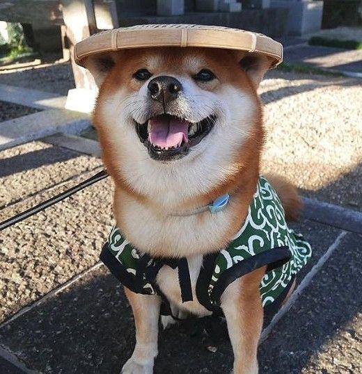 200+ Cool and Ideal Shiba Inu Dog Names 7