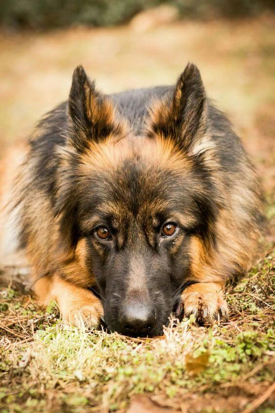 Top 51 Best Dog Breeds and What Make Them the Best! 104