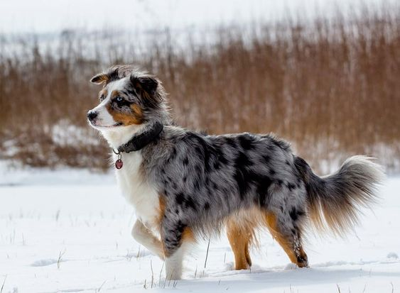 Top 51 Best Dog Breeds and What Make Them the Best! 119
