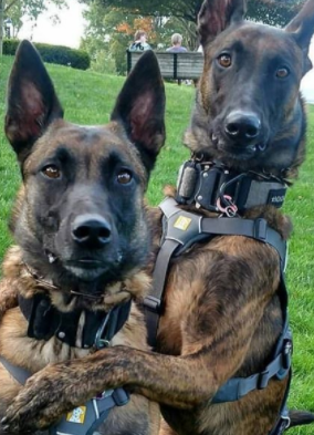 155+ Stronger Police Dog Names for K9 Dogs - Male & Female Names For Dogs 6
