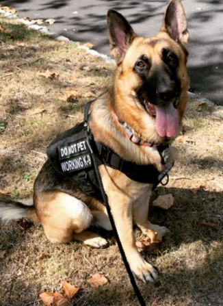 K9 and German Shepherd Police Dog Names