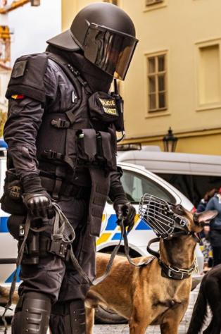 150 Perfect Police Dog Names - K9 and German Shepherd Police Dog Names 1