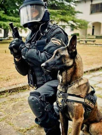133+ Police Dog Names from History and Inspired by Movie Cops 6