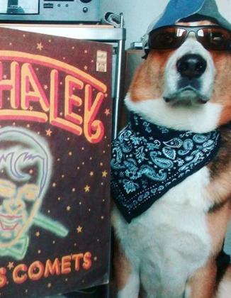 100+ Best Music Dog Names Inspired by Rock'n'Roll 5