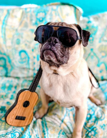 100+ Best Music Dog Names Inspired by Rock'n'Roll 6
