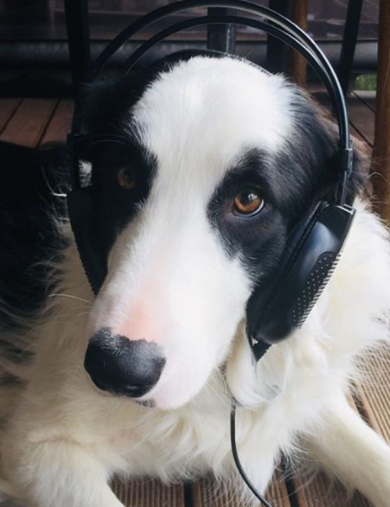 100+ Fantastic Music Dog Names Inspired by Country And Rap Music 5