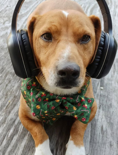 100+ Fantastic Music Dog Names Inspired by Country And Rap Music 6