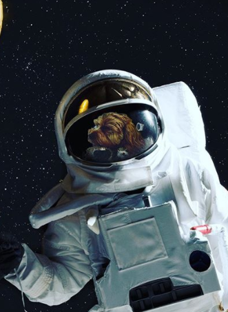 132+ Space Stars Inspired Dog Names For Your Pups 6