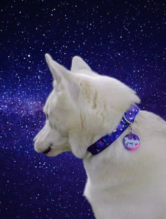 100+ Best Space Inspired Dog Names For Puppies 6