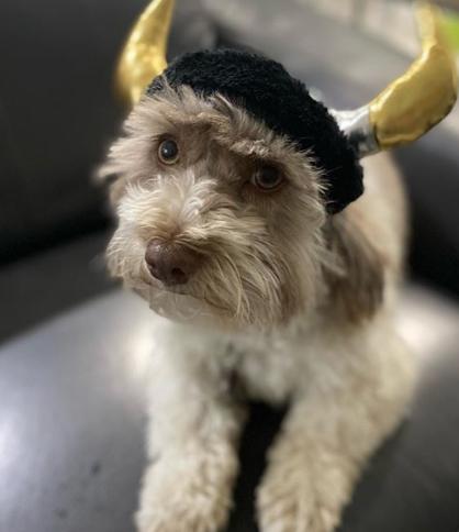100 Norse Mythology Names – Viking Dog Names for Your Puppies 6