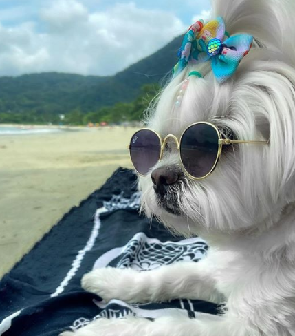 30 The Most Popular Dog Breeds in Brazil 64