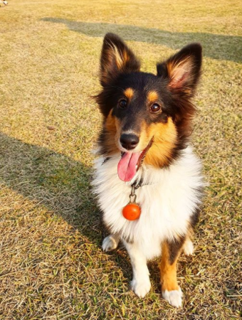 30 The Most Popular Dog Breeds in Brazil 73