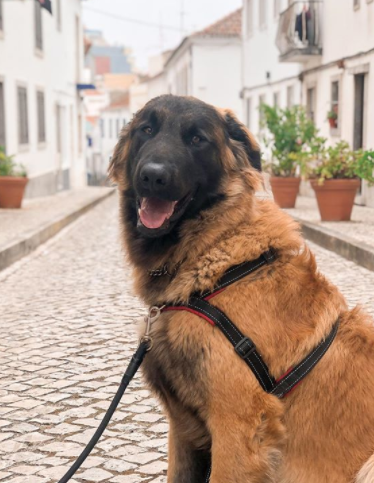 30 The Most Popular Dog Breeds in Brazil 87