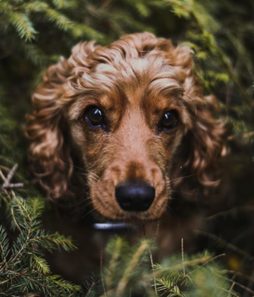 30 The Most Popular Dog Breeds in UK 62