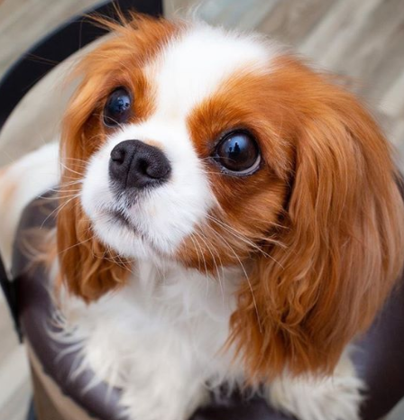 30 The Most Popular Dog Breeds in UK 76