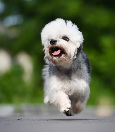 30 The Most Popular Dog Breeds in UK 86