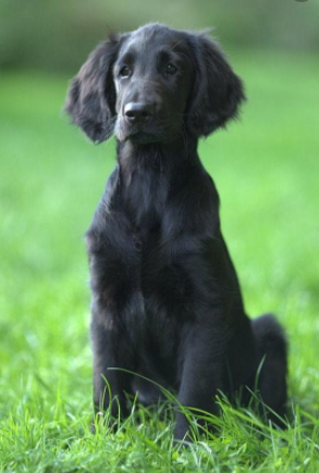 30 The Most Popular Dog Breeds in UK 89