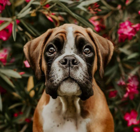 30 The Most Popular Dog Breeds in India 63
