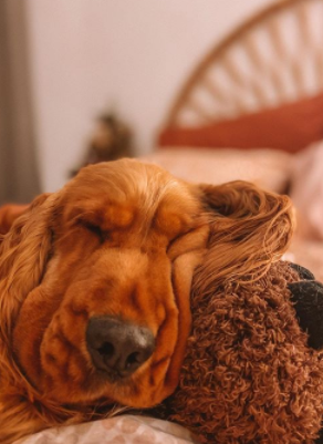 30 The Most Popular Dog Breeds in India 73
