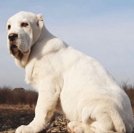 30 The Most Popular Dog Breeds in Nigeria 76