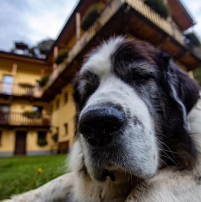 30 The Most Popular Dog Breeds in Spain 64