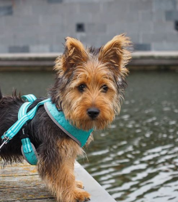 30 The Most Popular Dog Breeds in Spain 71