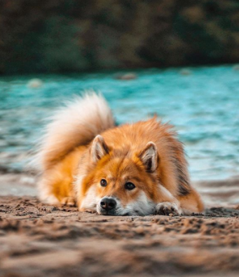 30 The Most Popular Dog Breeds in New Zeland 89