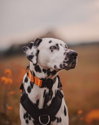 30 The Most Popular Dog Breeds in New Zeland 86