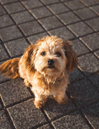 30 The Most Popular Dog Breeds in New Zeland 83