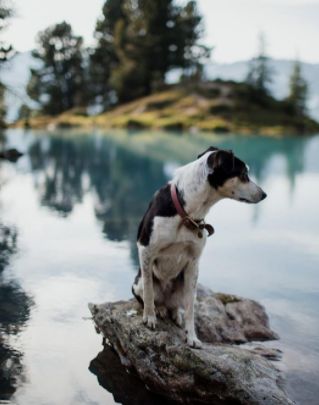 30 The Most Popular Dog Breeds in New Zeland 64