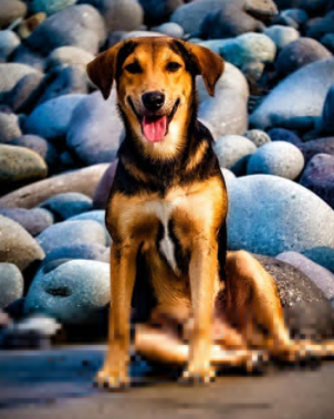 30 The Most Popular Dog Breeds in New Zeland 62