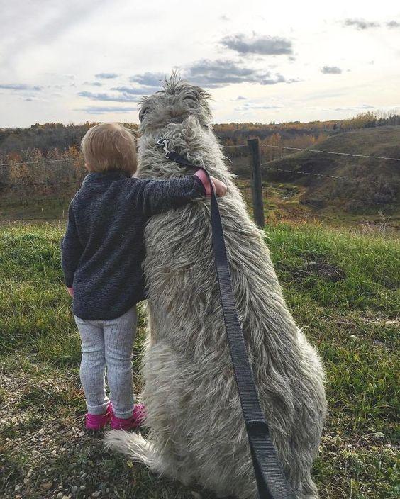 180+ Lovable Irish Wolfhound Dog Names 2020 7