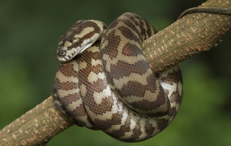 Why do people have snakes for pets? 2