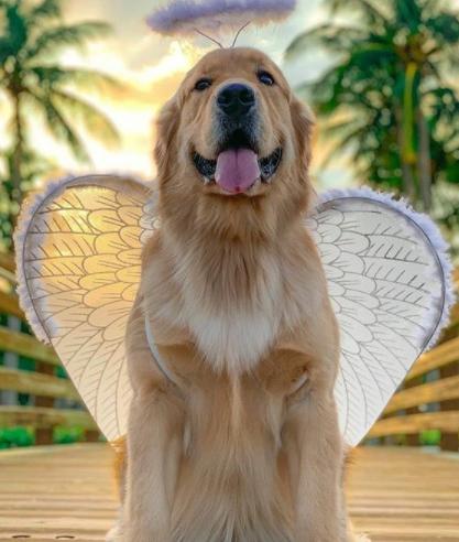 400+ Indian Dog Names 12