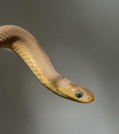 21 Friendly Pet Snakes For Rookies 43