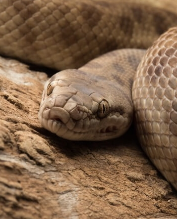 21 Friendly Pet Snakes For Rookies 63