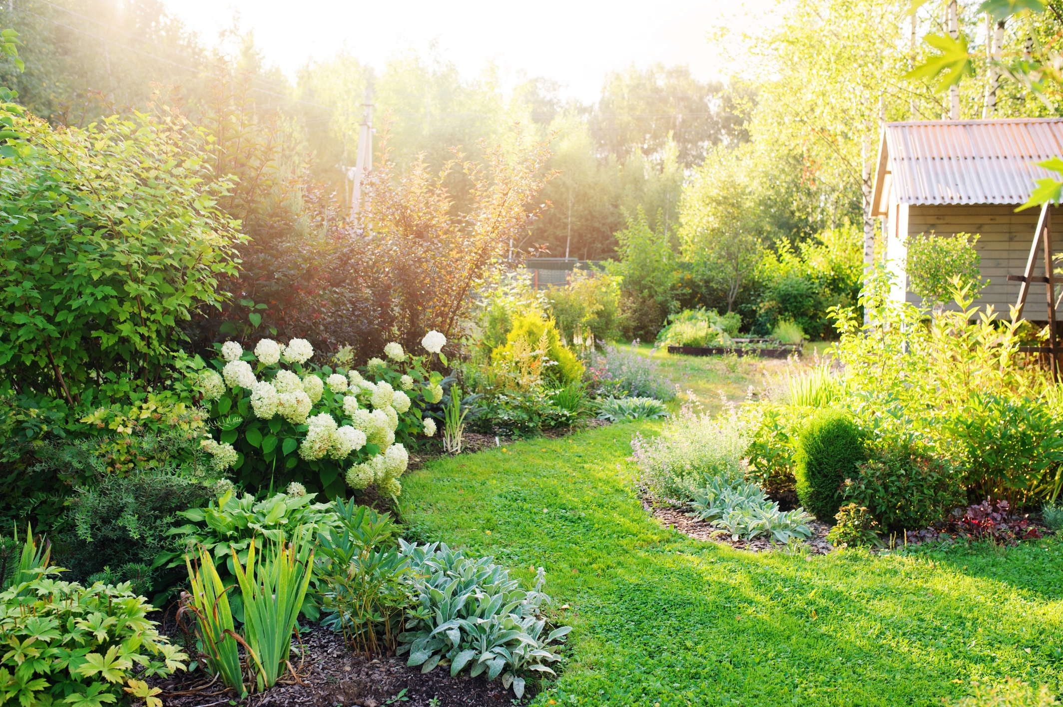 5 Improvements That Can Help Your Garden Thrive 3