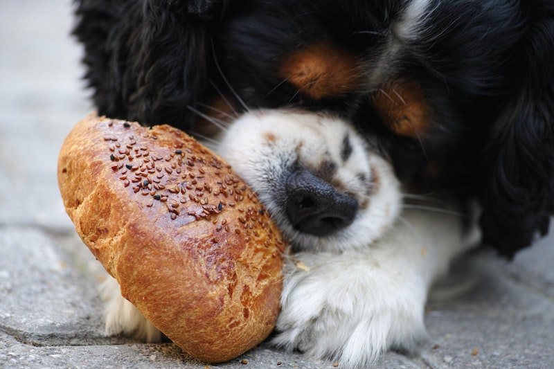 What is Really In Pet Food