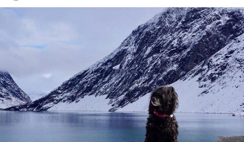 Portuguese Wasserhund or Portuguese Water Dog 35