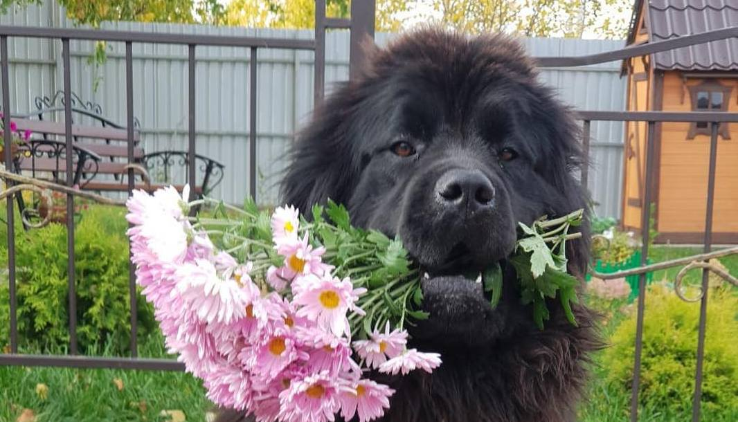 15 Newfoundland Pics That'll Keep You Smiling
