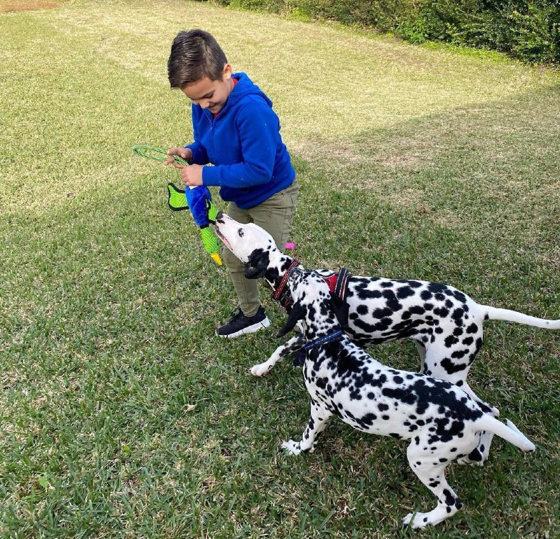 Tips to Improve the behavior of your dog 12
