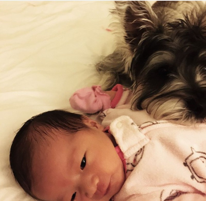 15 Reasons Why You Should Never Own Schnauzers 8