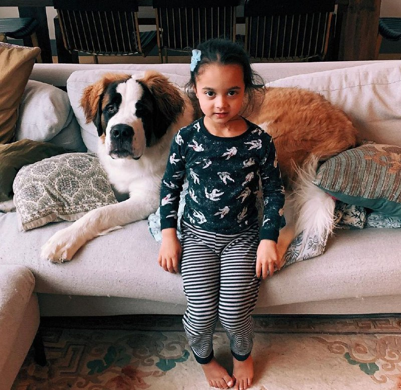 15 Reasons Why You Should Never Own St Bernard 8