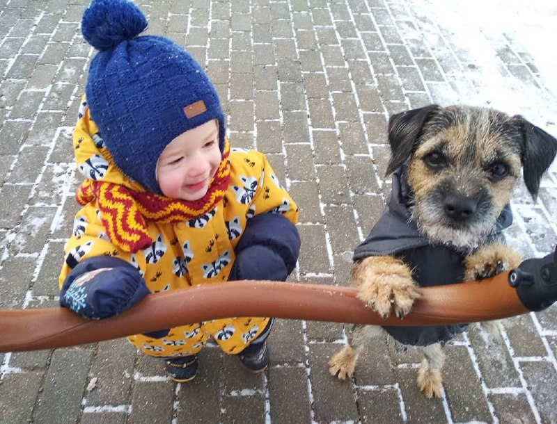 15 Reasons Why You Should Never Own Border Terriers 8