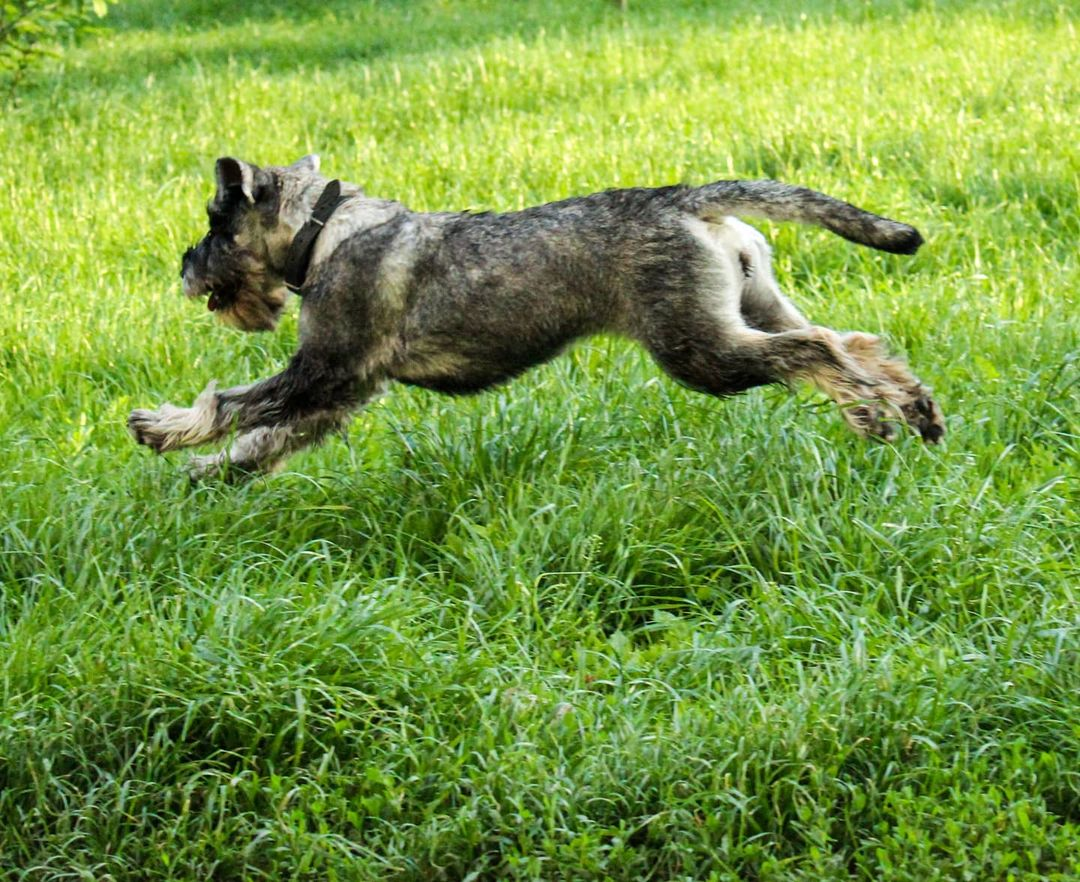 Tips to Improve the behavior of your dog 13